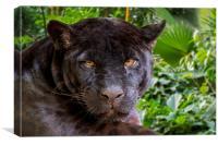 Black panther, Canvas Print