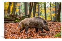 Wild Boar in Autumn Forest, Canvas Print