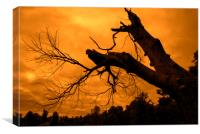 Spooky Forest at Sunset, Canvas Print