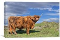 Highlander in Scotland, Canvas Print