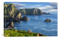 Hermaness, Unst, Shetland Islands, Canvas Print