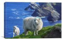 Sheep at Hermaness, Unst, Shetland Islands, Canvas Print