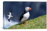 Atlantic Puffin and Gannet, Canvas Print