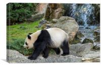 Panda Bear and Waterfall, Canvas Print