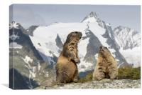 Marmots in the Alps, Canvas Print