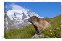 Alpine Marmot in the Hohe Tauern, Canvas Print
