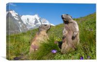 Alpine Marmot Couple in the Alps, Canvas Print