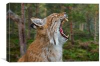 European Lynx Calling in Forest, Canvas Print