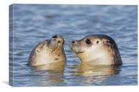 Two Common Seals, Canvas Print