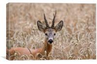 Roe Deer in Field, Canvas Print