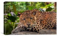 Sleepy Leopard, Canvas Print