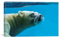 Polar Bear Diving, Canvas Print