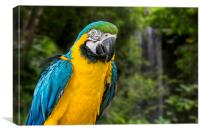 Blue-and-Yellow Macaw, Canvas Print