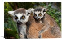 Ring-tailed Lemur with Baby, Canvas Print