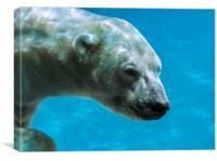 Polar Bear Swimming Underwater, Canvas Print