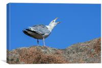 Herring Gull Calling, Canvas Print