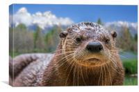 North American River Otter, Canvas Print