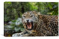 Sri Lankan Leopard, Canvas Print