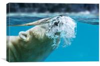 Polar Bear Surfacing, Canvas Print