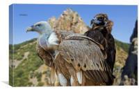 Vultures, Canvas Print