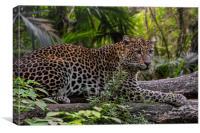 Leopard in Tropical Rainforest, Canvas Print
