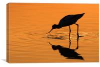 Pied Avocet at Sunset, Canvas Print