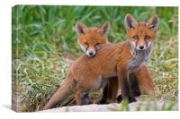 Two Red Fox Kits, Canvas Print