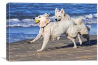 White Swiss Shepherd Dogs Playing Fetch, Canvas Print
