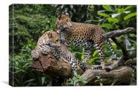 Sri Lankan Leopard Couple, Canvas Print