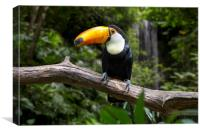 Giant Toucan and Waterfall, Canvas Print