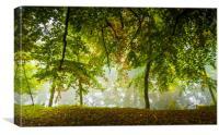 riverside trees, Canvas Print
