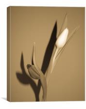 Dancing Tulips, Canvas Print