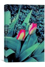 Tulips In Bed, Canvas Print