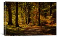 Grasmere Woods Autumn Light, Canvas Print