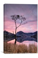 Lone Tree Sunrise, Canvas Print