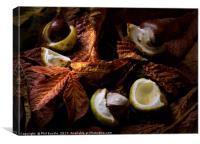 Autumn Conkers, Canvas Print
