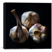 Garlic Bulbs, Canvas Print