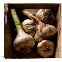 Fresh Garlic Bulbs in Box, Canvas Print