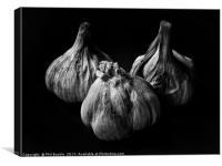 Garlic Bulbs Black and White, Canvas Print