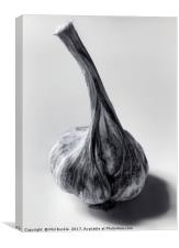 Garlic Bulb Black and White, Canvas Print