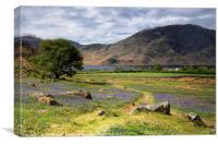 Rannerdale Bluebells near Crummock Water, Canvas Print
