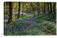 Bluebells at Fishgarths Wood, Clappersgate, Canvas Print