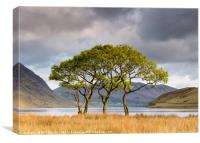 Copse on Crummock Water, Canvas Print