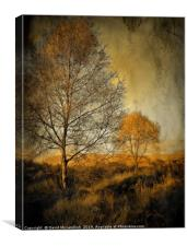 Birch trees on Ardinning Moor 2, Canvas Print
