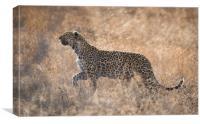 Leopardess, Canvas Print