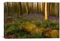 Dorset Bluebell Wood, Canvas Print