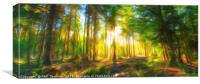 Sunset in the woods, Canvas Print