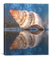 Seashell., Canvas Print