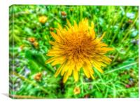 HD yellow dandelion flower framed photo print, Canvas Print