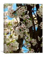 Cherry blossom flowers framed photo print, Canvas Print